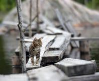Katt på en brygga på sjön Arkivbild