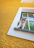 Katt på en fönsterfönsterbräda royaltyfri fotografi
