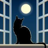 Katt på en fönsterfönsterbräda royaltyfri illustrationer
