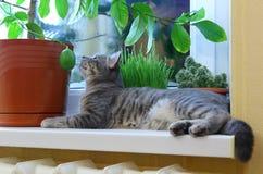 Katt på en fönsterfönsterbräda Arkivfoton