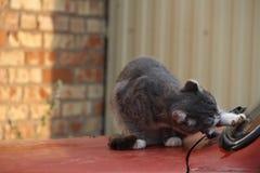 Katt på en gammal bil fotografering för bildbyråer