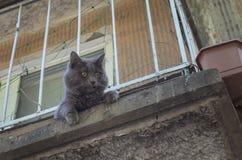 Katt på en hög balkong fotografering för bildbyråer