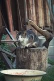 Katt på en journal Arkivbilder