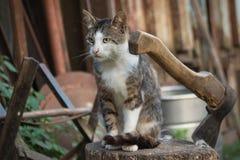 Katt på en journal Arkivfoto