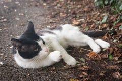 Katt på en landsväg royaltyfria foton