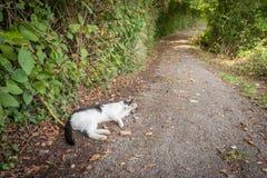 Katt på en landsväg fotografering för bildbyråer