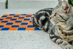 Katt på en marmortabell royaltyfria foton