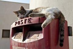 Katt på en Postbox Royaltyfria Bilder