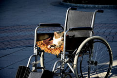 Katt på en rullstol Fotografering för Bildbyråer