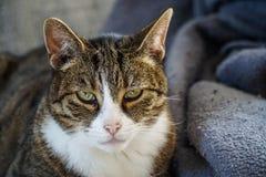 Katt på en soffa arkivfoton
