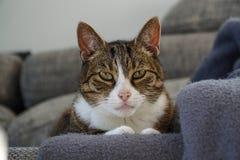 Katt på en soffa fotografering för bildbyråer