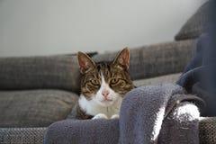 Katt på en soffa royaltyfri bild