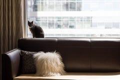 Katt på en soffa framme av ett stort fönster arkivfoto