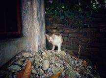 Katt på en spillror Arkivbilder