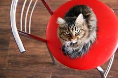Katt på en stol Royaltyfri Fotografi