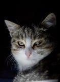 Katt på en svart bakgrund Arkivfoton