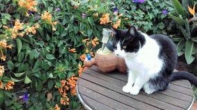 Katt på en tabell Royaltyfria Foton