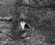 Katt på en trädgård från sommar arkivbild