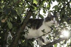 Katt på en tree Arkivfoton