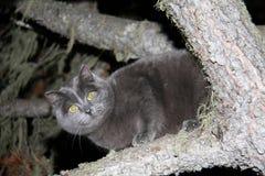 Katt på en tree royaltyfri fotografi