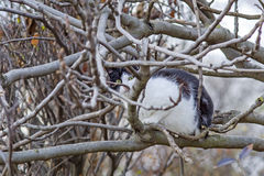 Katt på en tree Royaltyfria Bilder