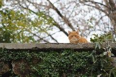 Katt på en vägg Royaltyfria Bilder