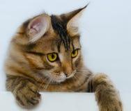 Katt på en vitbakgrund Arkivfoto
