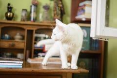 Katt på escritoiren Royaltyfri Bild