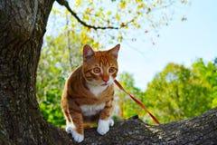Katt på ett koppelsammanträde på en filial royaltyfri bild