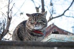 Katt på ett staket royaltyfri foto