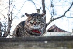 Katt på ett staket fotografering för bildbyråer