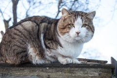 Katt på ett staket arkivbild