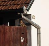Katt på ett staket arkivbilder