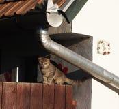Katt på ett staket royaltyfri bild