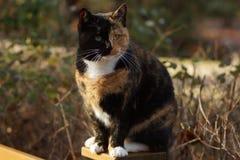 Katt på ett staket Royaltyfria Bilder