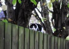 Katt på ett staket arkivfoto
