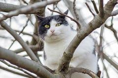 Katt på ett träd 2 Royaltyfri Fotografi