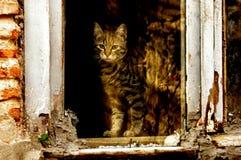 Katt på fönster Arkivbilder