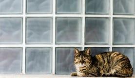 Katt på fönsterfönsterbräda Arkivbild