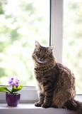 Katt på fönstret Royaltyfri Fotografi