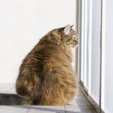 Katt på fönstret Fotografering för Bildbyråer