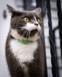 Katt på farstubro Royaltyfria Bilder