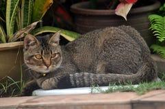 Katt på fred Arkivfoto