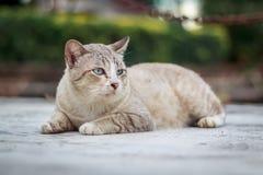 Katt på gatan Arkivfoto