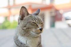 Katt på gatan Royaltyfria Foton