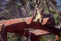 Katt på gazeboen Arkivfoto