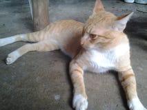 Katt på golvet Royaltyfria Bilder