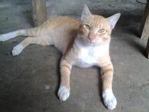 Katt på golvet Fotografering för Bildbyråer