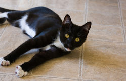Katt på golvvarning Arkivbilder