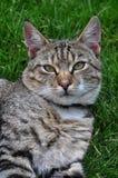 Katt på gräs Royaltyfri Bild